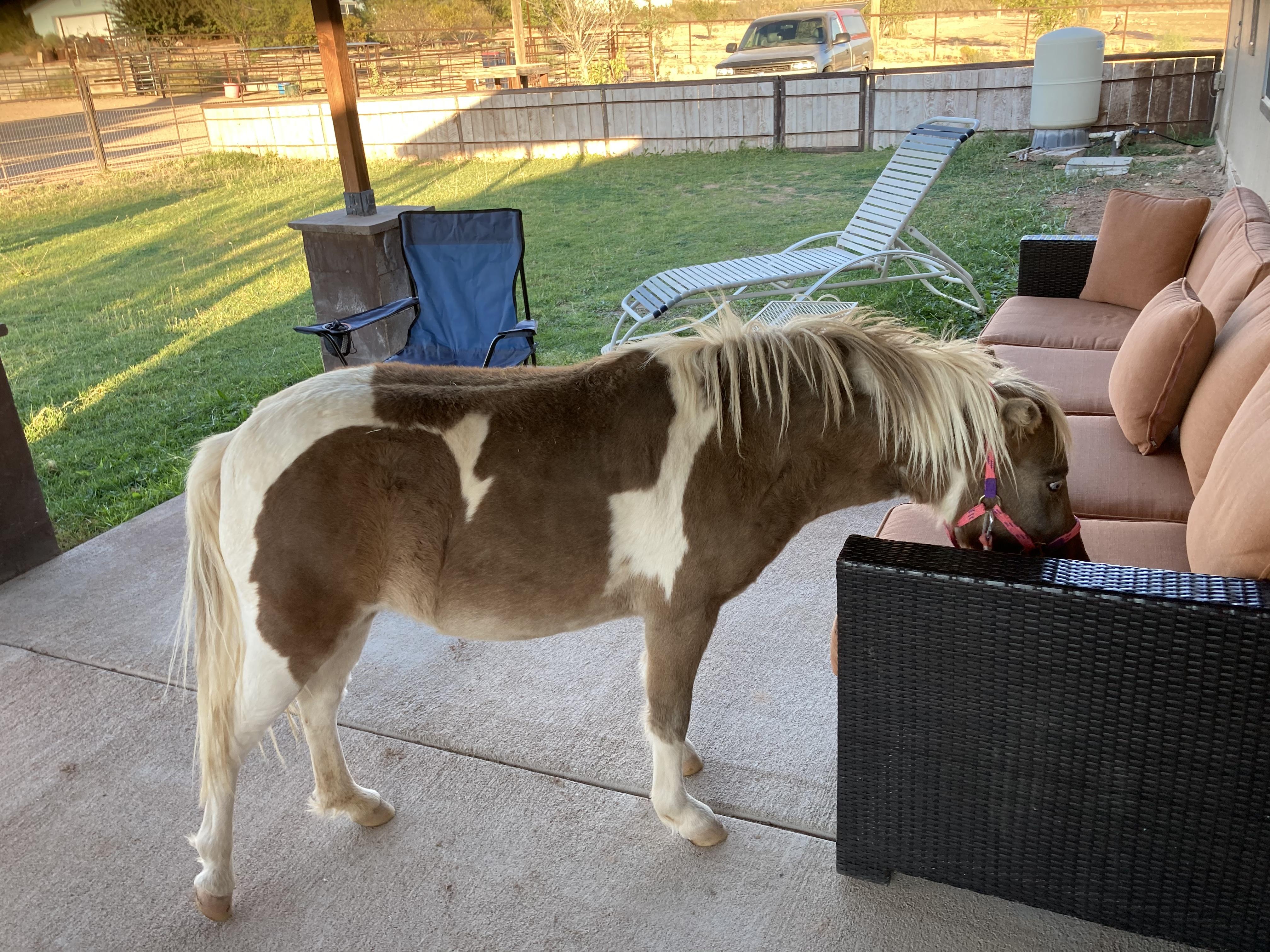 Eco horse ranch and spiritual oasis